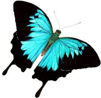 http://www.tvokids.com/games/butterflycount